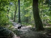 Doginthewoods2