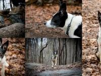 Woods_4-10-15